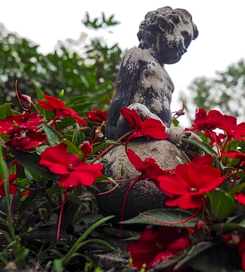 Cupid in Red Flowers